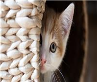 هل بيع القطط «حرام»؟ عضو بـ«الأزهر للفتوى» يجيب
