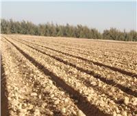 «الزراعة» تصدر تقريرا حول مشروع مكافحة العفن البني في البطاطس
