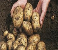 بالأرقام.. تعرف على حجم عينات البطاطس التي تم فحصها خلال عام