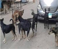 طوارئ بمركز منوف لمواجهة ظاهرة انتشار الكلاب الضالة