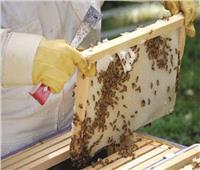 صور| عسل النحل.. صناعة وتجارة «ملف»