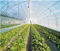 «الحياة اليوم» ينفرد بتغطية خاصة من مشروع «الصوب الزراعية» بقاعدة محمد نجيب