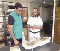 حوار| أول مكتشف مصري للديناصورات: لم تنقرض وأحفادها ضيف دائم على موائدنا
