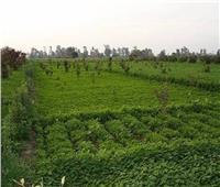 «الزراعة»: تكليف أنور عيسى مديرا لمديرية الزراعة بالجيزة