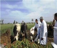 تحصين ١٨٨ ألف رأس ماشيةبالشرقية ضد الحمى القلاعية والوادي المتصدع
