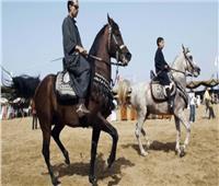 انطلاق مهرجان الخيول العربية بالشرقية سبتمبر القادم