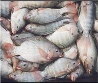 «أسعار الأسماك» في سوق العبور اليوم 25 يوليو