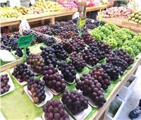 أبرزها الموالح.. الزراعة: ارتفاع صادرات مصر لأكثر من 4.4 ملايين طن