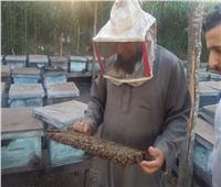 فيديو وصور| رحلة إنتاج عسل النحل في دمياط.. وأصحاب المناحل: نواجه «أزمة»