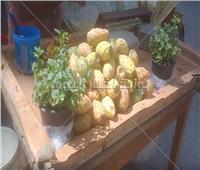 فيديو وصور  «أبو حلاوة يا تين».. عم «أحمد» بائع فاكهة الغلابة يشكو الركود