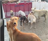 وزيرة البيئة| الكلاب بريئة من ظهور ثعابين التجمع الخامس