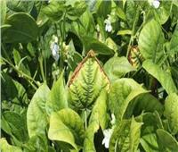 الزراعة تنظم دورات للتدريب على مكافحة أمراض المحاصيل الحقلية والبستانية