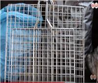 فيديو| بالأسعار.. انتعاش سوق الشوايات قبل عيد الأضحى