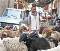 عيد الأضحى| 25 نصيحة للشراء والذبح