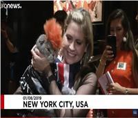 فيديو| بملابس أنيقة.. عرض أزياء للقطط في أمريكا
