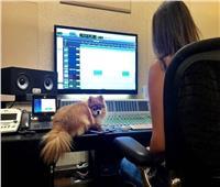 إليسا تواصل تحضيرات ألبومها الجديد