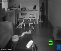 شاهد| زلزال يفاجئ قططا نائمة في تايوان