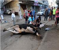 شاهد بالصور| المسلمون في العالم يذبحون الأضاحي