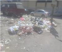 صور| «جزار بحدائق القبة»يخالف القانون ويلقي أحشاء الأضاحي في الشارع