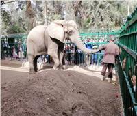 34 ألف زائر لـ«حديقة الحيوان» في أول أيام عيد الأضحى