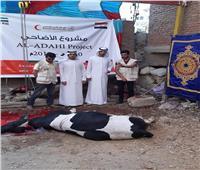 سفارة الإمارات بالقاهرة تشرف على مشروع توزيع الأضاحي