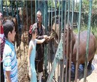 رجائي: حديقة حيوان الجيزة تستقبل 30 ألف زائر