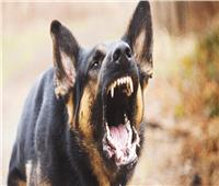 اعترافات قاتل ابن أخيه: أنهيت حياته بـ«عضة كلب»