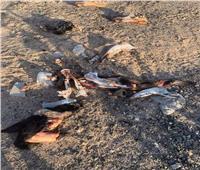 بالصور| «عظام غامضة» تثير شائعات لحم الحمير بالغردقة
