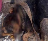 حبس «جزار الزقازيق» لتعذيبه «كلب»