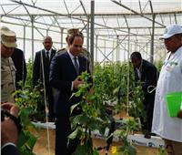مركز بحوث الصحراء: مشروع الصوب الزراعية يعتبر الثاني عالميا