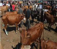 «الزراعة» توضح 3 محاور كان سببا في إنخفاض أسعار الأضاحي هذا العام
