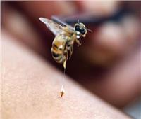 العلاج بـ«قرص النحل»| متخصصون: صيدلية ربانية