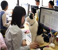 دراسة: الشركات اليابانية التي تسمح للموظفين باصطحاب الحيوانات الأليفة تحقق أرباحا كبيرة