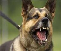 كلب ضال يعقر 7 أشخاص في البحيرة
