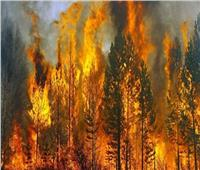 «حرائق الغابات» كلفت روسيا 106 ملايين دولار