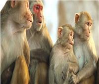 شاهد| ولادة سلالة نادرة من القرود بكولومبيا