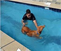 «الطب البيطرى»: فندق الكلاب بالغردقة «غير مرخص» ولجنة لفحصه