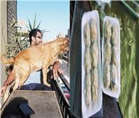 وجبات «دليفرى» للحيوانات الأليفة