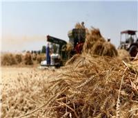 «التموين» تتعاقد على شراء 350 ألف طن قمح مستورد
