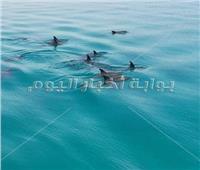 صور  الدلافين تهرب من مناطق «فرض الرسوم» بالغردقة وتظهر بالقرب من الشواطئ