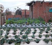 خاص  تفاصيل مبادرة زراعة «أسطح المنازل» بمحافظة القاهرة