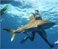 «بيئيون»: أبرزها استفزازها.. أسباب هجوم أسماك القرش على الإنسان