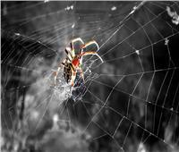 ما صحة قصة «العنكبوت والغار»؟.. «الإفتاء» تجيب