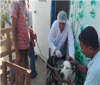 حملة للتفتيش وتحصين الكلاب في الغردقة.. والتطعيم أكثر من مرة «خطر»