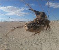 بدء موسم صيد الطيور المهاجرة على سواحل مطروح