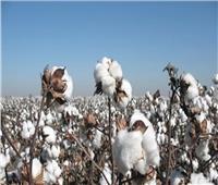 فيديو  باحث اقتصادي: الدولة تشجع الفلاح على زراعة القطن وتسويقه