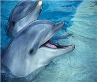 الدلافين تتغذى على السردين في خليج يوناني