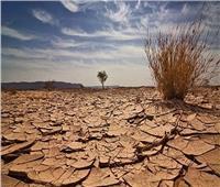 وزير الزراعة من الهند: التصحر من أهم التحديات البيئية التي تهدد الوجود الإنساني