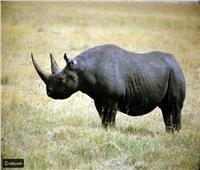 تنزانيا تستقبل تسعة من وحيد القرن الأسود من جنوب إفريقيا
