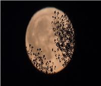 خبيرة الأبراج: توضح تأثير اكتمال «قمر الحصاد» على برجك